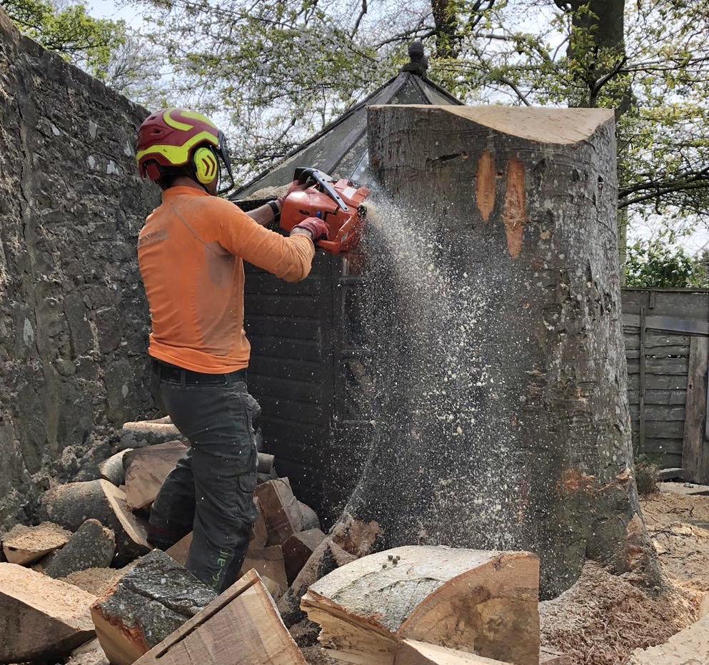Tree Cutting Aberdeen